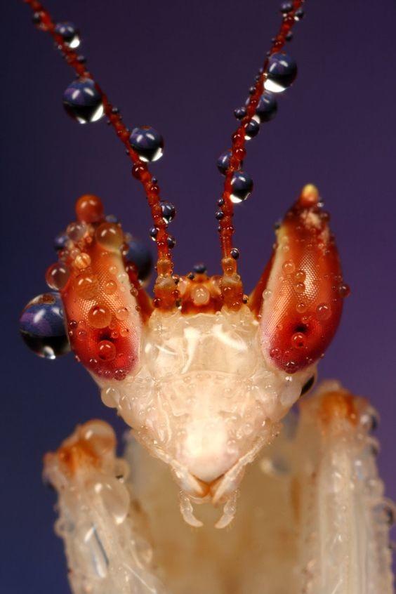 Не ждите инопланетян - они уже давно на планете богомолы, интересное, красота, насекомые