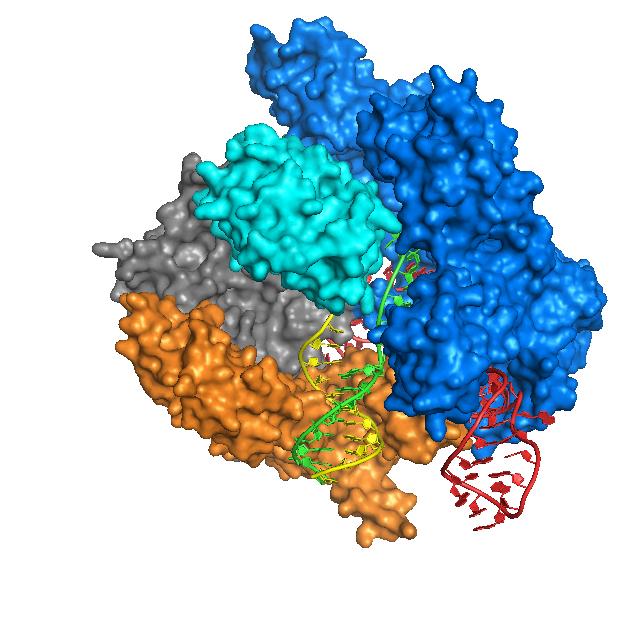 Кристаллическая структура Cas9, связанного с ДНК / ©Nature