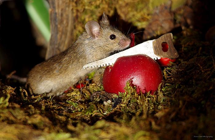 Мышкам понравилось жить в саду у Саймона.
