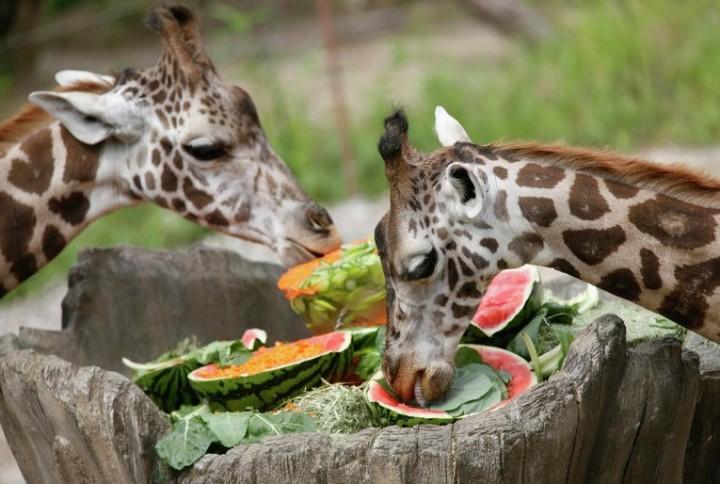 Картинки как животные едят животных