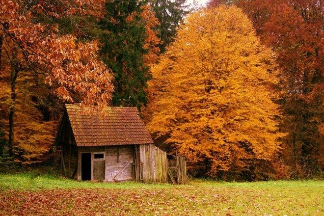 houseinwood01 Самые красивые дома в лесу