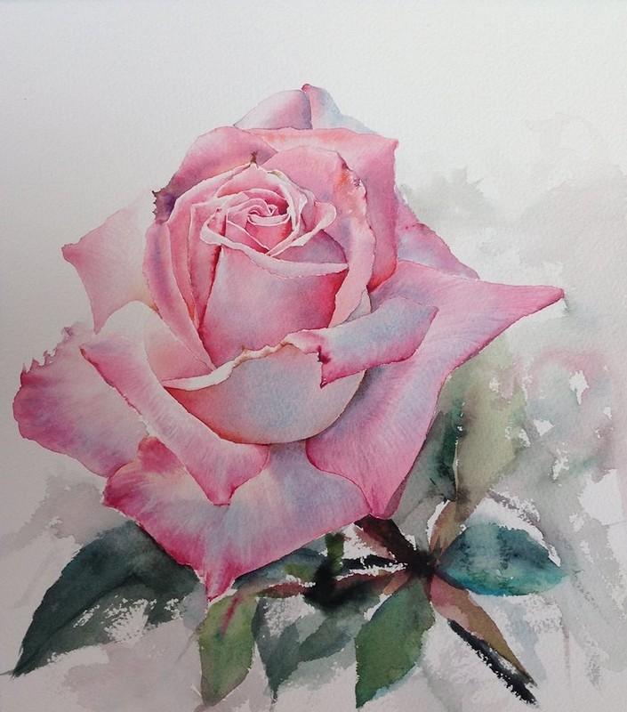 Картинка розы акварелью