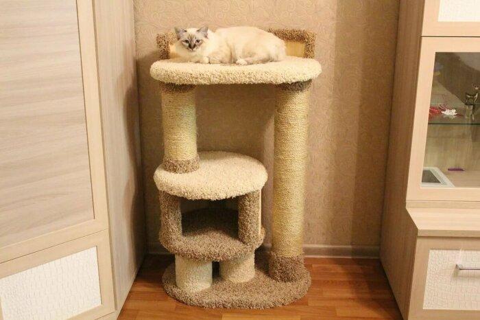 Когтеточку рекомендуется устанавливать в месте, где кот играет чаще всего / Фото: yandex.ua