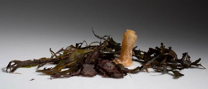 Аналог пластика из водорослей.