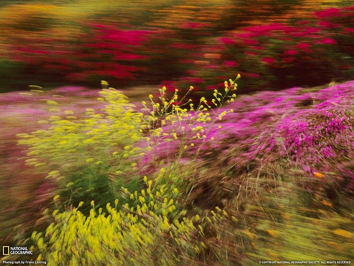 Полевые цветы, Калифорния