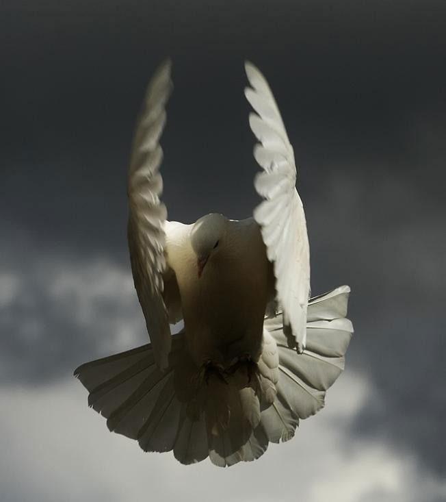 Птицы в полете