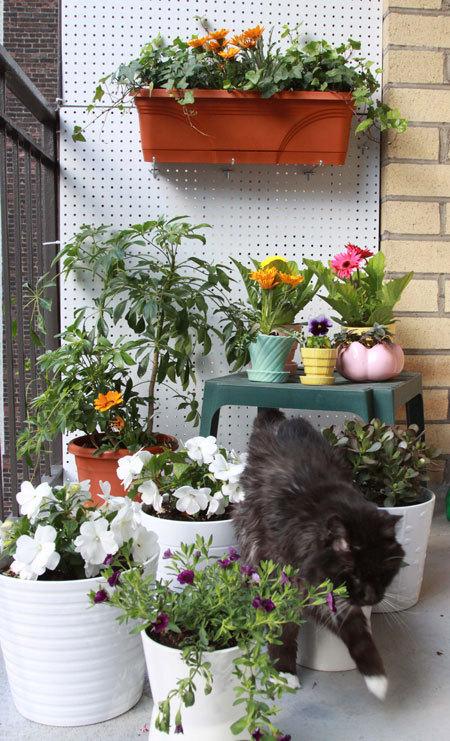16 очаровательных сезонных идей для сада на балконе фото 2