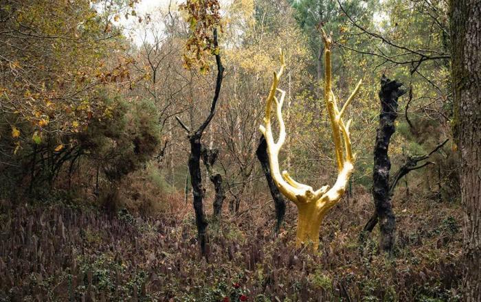 Золотое дерево, Лес Броселянде, Франция