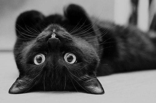 Любить черного кота
