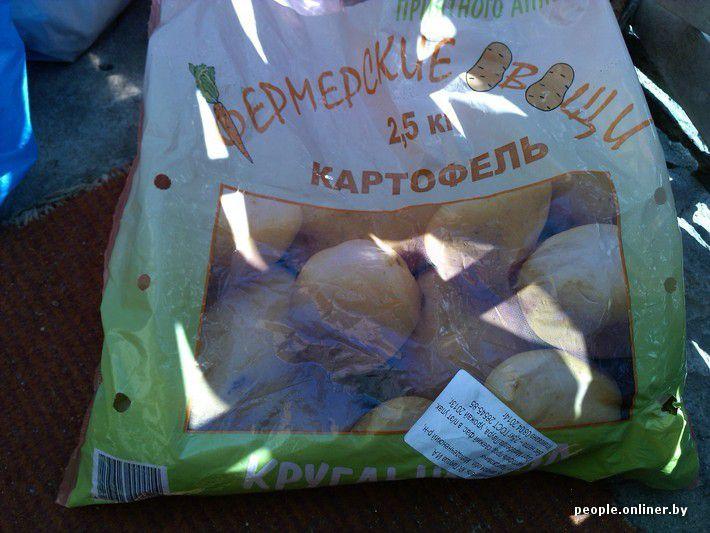 Сюрприз в пакете с картошкой картошка, сюрприз, беларусь