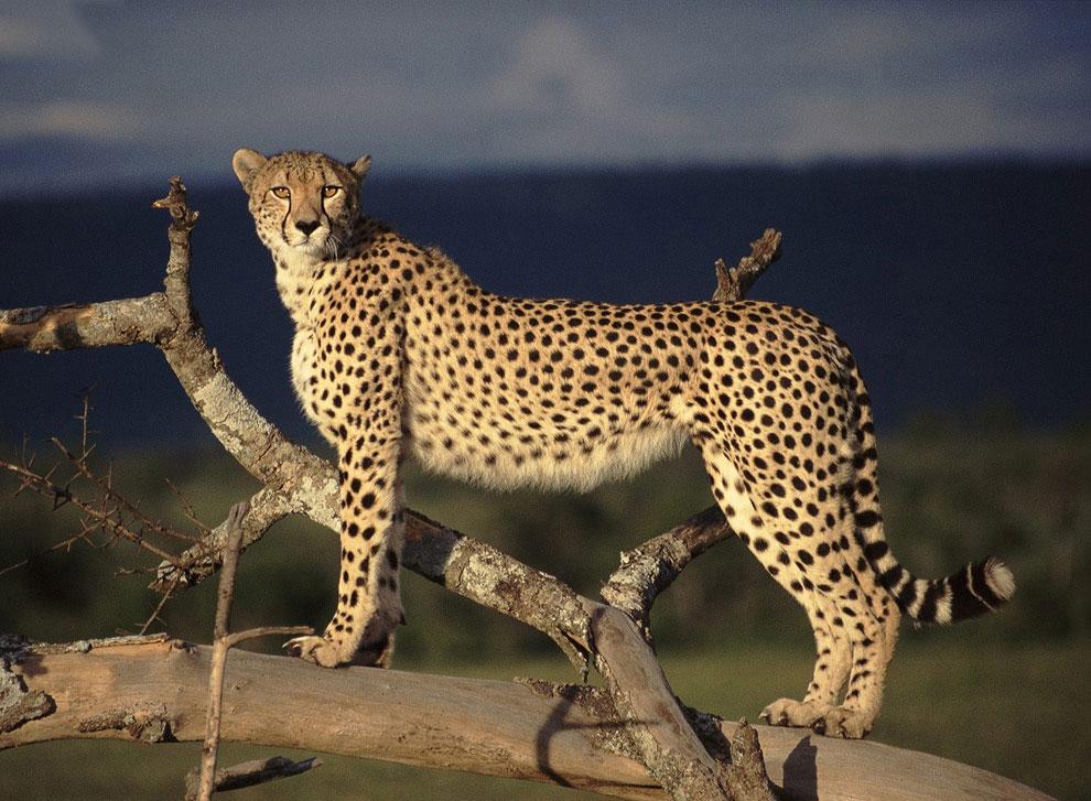 местный картинки про животных картинки про хищных животных всегда