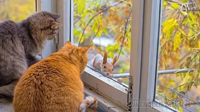 фото сима кошка