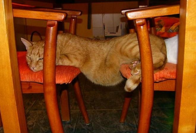 У котов явно свое представление о логике :-)