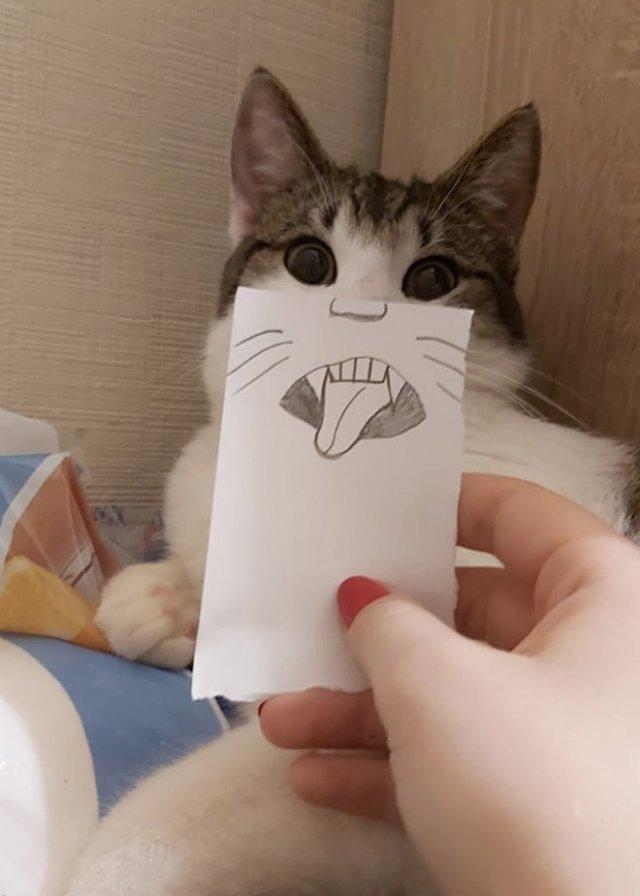 Очень смешные кошки с нарисованными ртами Юмор,приколы