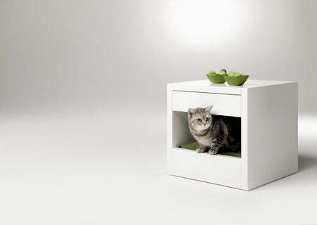 Спальня для любимой кошки: 10 милых идей фото 10