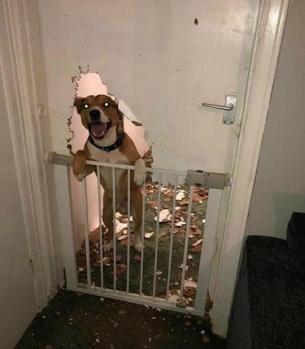 Филигранно расправился с дверью. | Фото: Zena Blic.