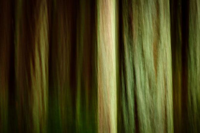 Абстрактные узоры, созданные самой природой