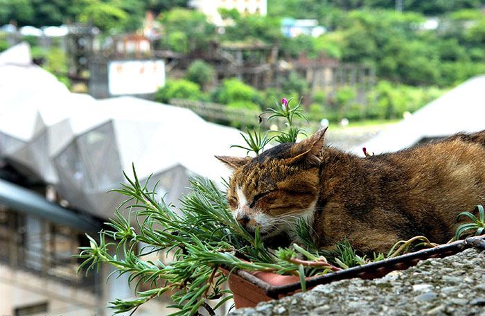 Котик в Хоутонге.