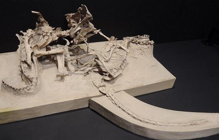 Древняя окаменелость: велоцираптор и протоцерапторс.