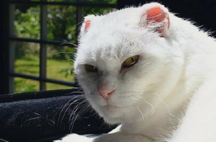 Агрессивное поведение и крики не дадут результата, кот наоборот начнет мстить хозяину / Фото: shnyagi.net