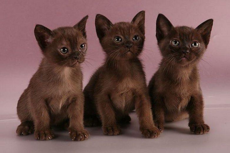 Фото котят и кошек | Кот, кошка и котята