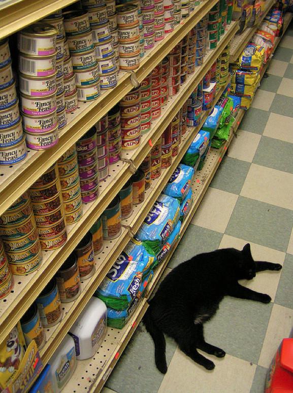 автомобиль картинки кошки в магазине новокузнецка