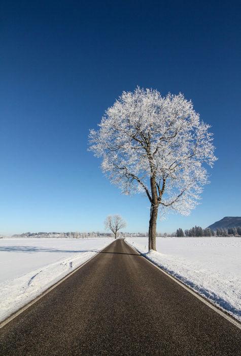 Ровная дорога, убегающая в зимние равнины.