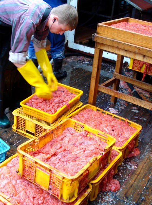 caviar05 Как делают красную икру