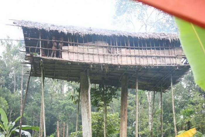 Некоторые папуасы живут в домах на деревьях.   Фото: kulturologia.ru.
