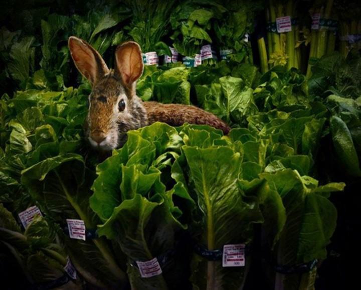 CuriousAnimals09 Животные в супермаркете