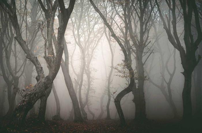 страшный лес в румынии