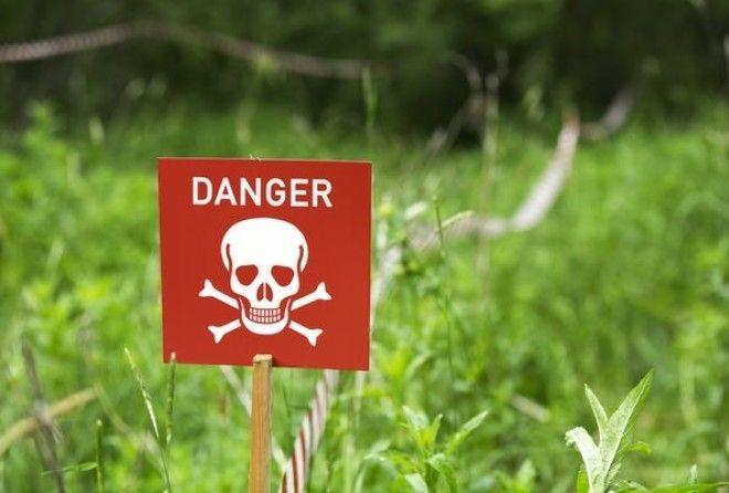 Неожиданная опасность известных всем растений