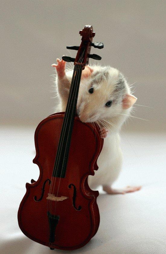 Крыса играет на контрабасе. Эллен ван Дилен. Фото