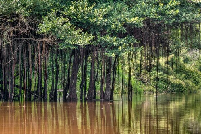 Растительность на берегах Амазонки необыкновенно красивая / Фото: ameinfo.com