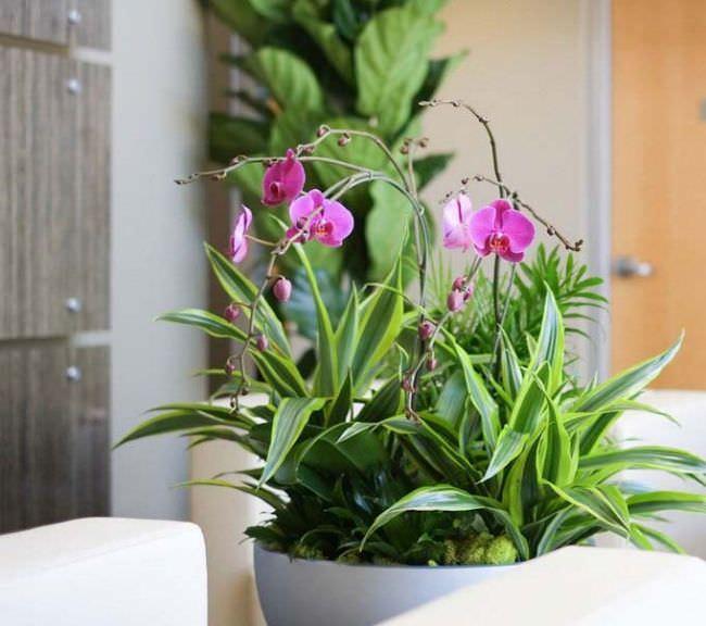 Орхидея по фэншуй считается источником комфорта и достатка