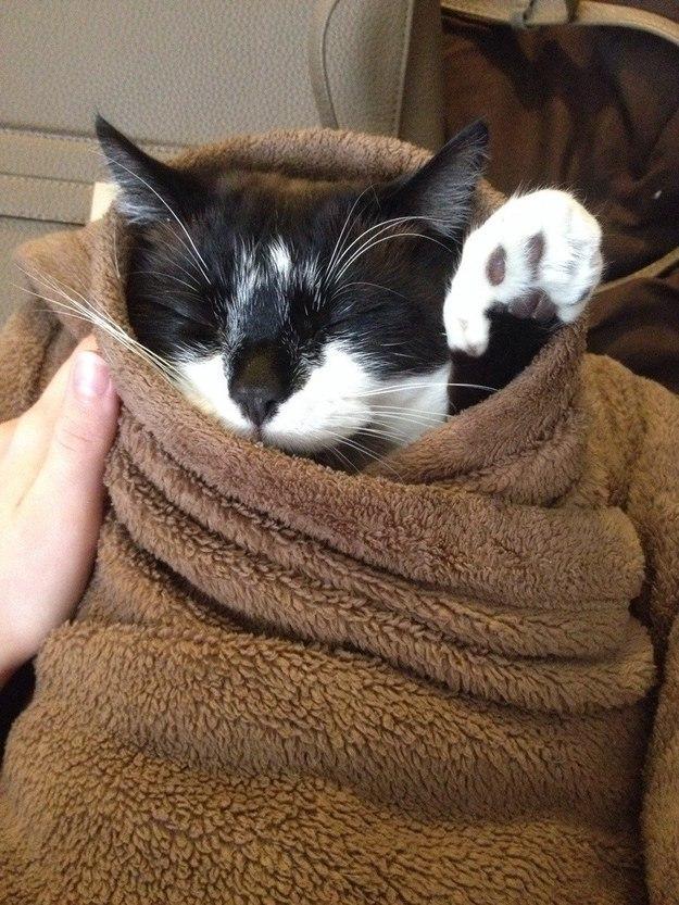 котик спасает мир
