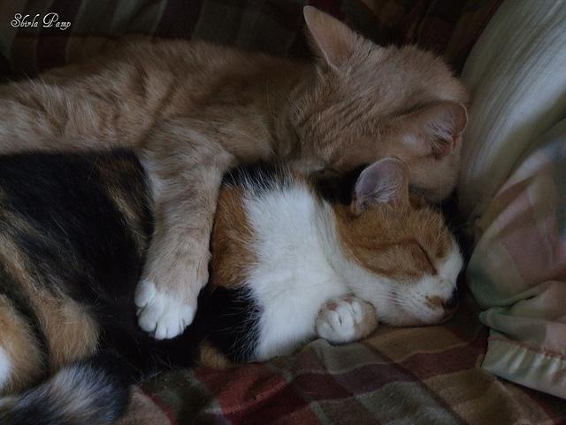 Кошачьи объятья. Фото