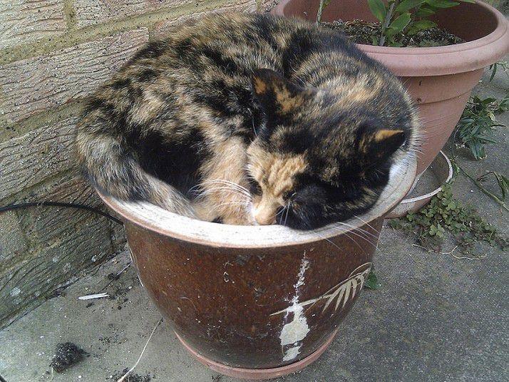 кошки уснувшие в неожиданных местах, спящие коты