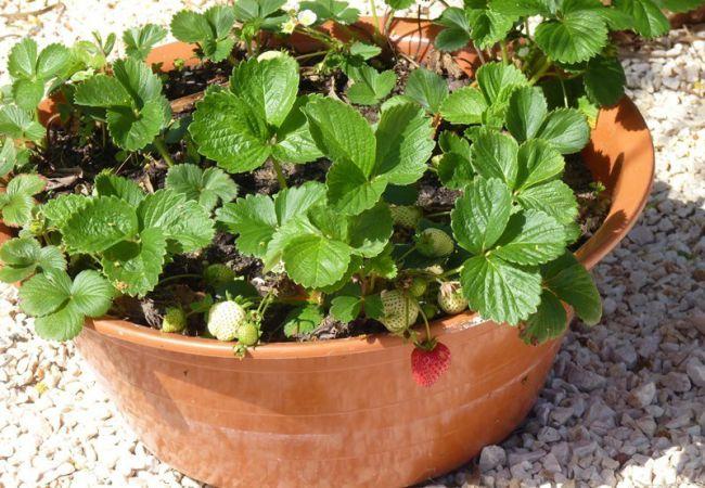 Совместный уход за растением - это великолепное занятие, способное объединить всю семью