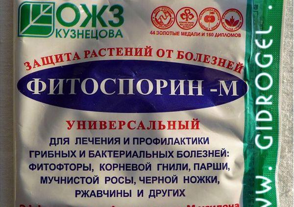 Лечат сажистый грибок при помощи Фитоспорина