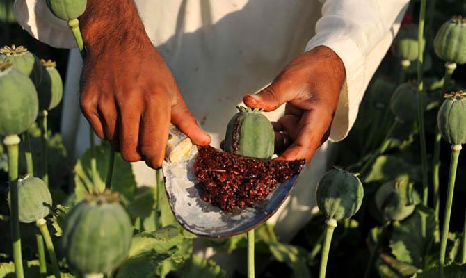 Опиум в Афганистане, Интересные факты о Странах Мира
