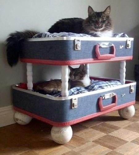Спальня для любимой кошки: 10 милых идей фото 4