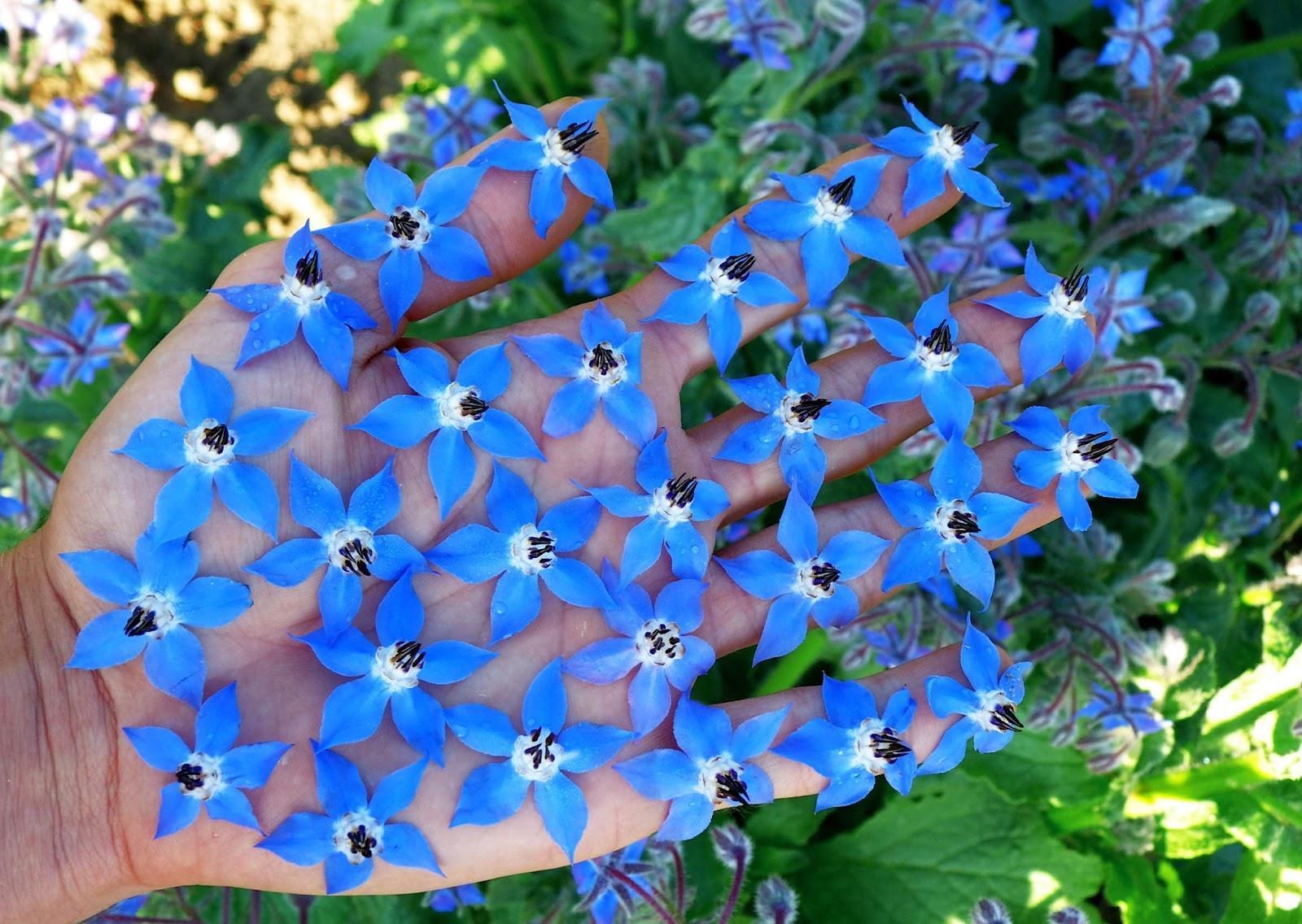 Цветок который цвет цветками в виде звездочек