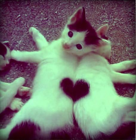 Маленькое сердечко. Фото