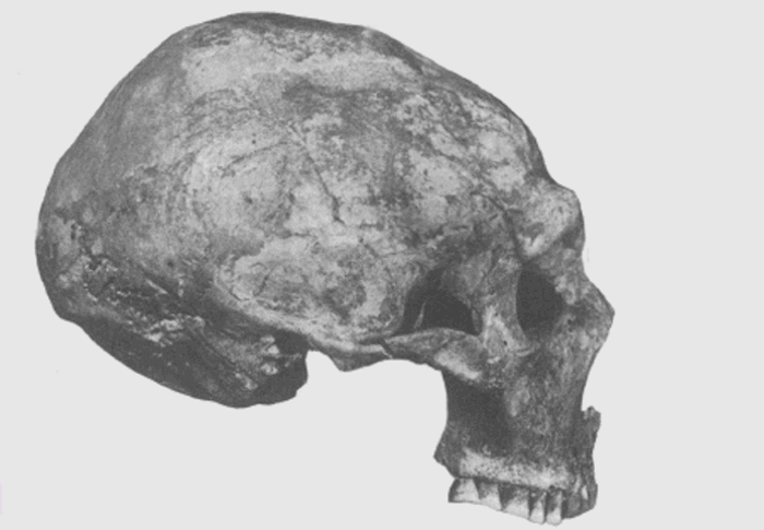 Деформация ради красоты: черепа Шанидара. / Фото: listverse.com