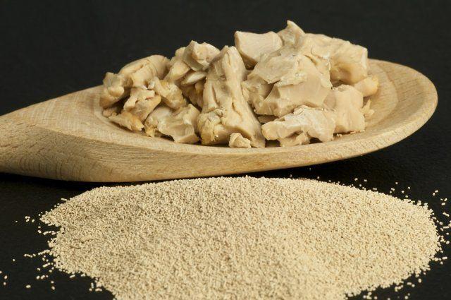 baking ingredient yeast powder and fresh yeast