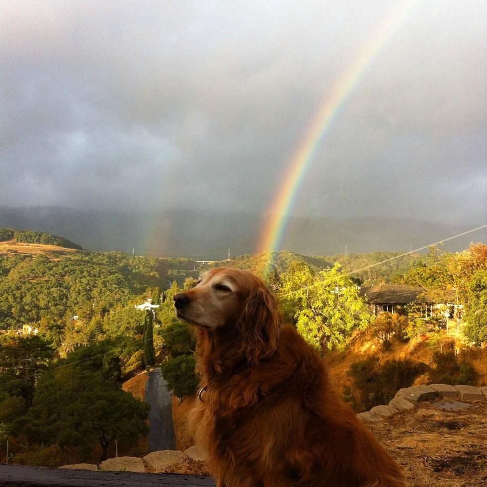 За радугой собаки картинки