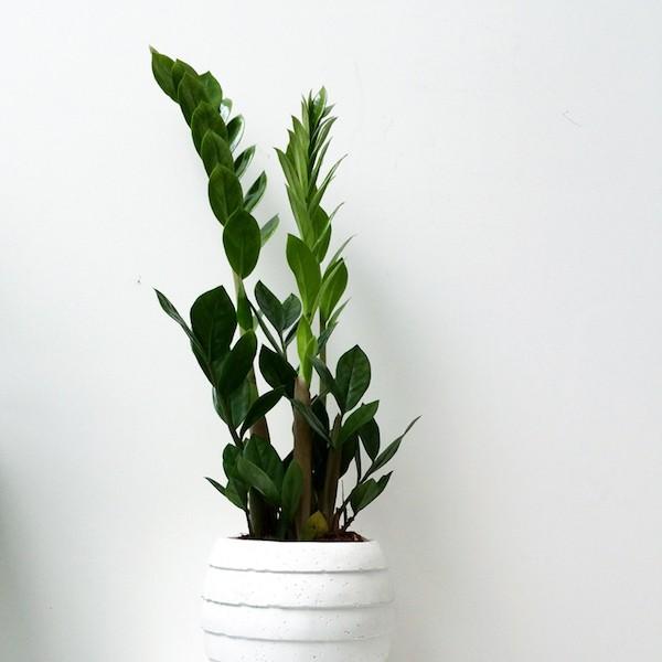 растения для ванной комнаты