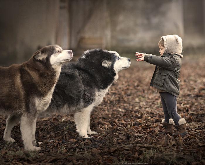 Очаровательные друзья в лесу.
