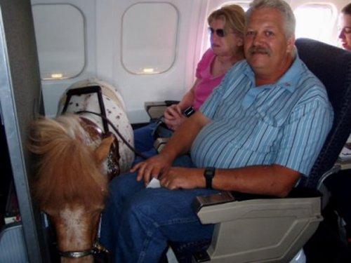 Топ-8: самые странные животные, обнаруженные в самолетах
